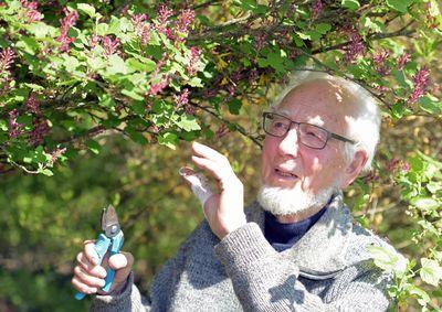 Foto: Erhard Eppler arbeitet im Mai 2016 in seinem Garten in Schwäbisch Hall (Baden-Württemberg)